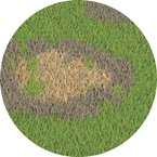 Brown Patch - Bayer - Golf Management