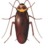 australian cockroach - environmental science - australia