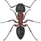 Carpenter Ant - Bayer Pest Control