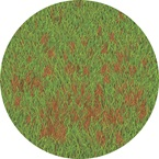 Anthracnose - Bayer Golf Management