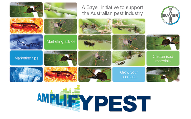 bayer amplify pest program