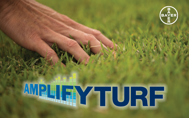 bayer amplify turf program